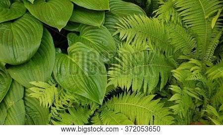 All Green Natural Background Of Tropical Plant And Fern Leaves Texture. Fresh Exotic Plant Foliage B