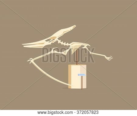 Pterodactyl Showcase Cartoon Vector Illustration. Museum Of Paleontology Exhibit. Dinosaur Skeleton