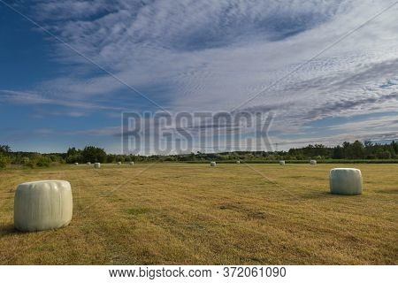Meadow After Haymaking. Flat, Vast Terrain. A Meadow On Which The Grass Has Been Cut. After Drying,