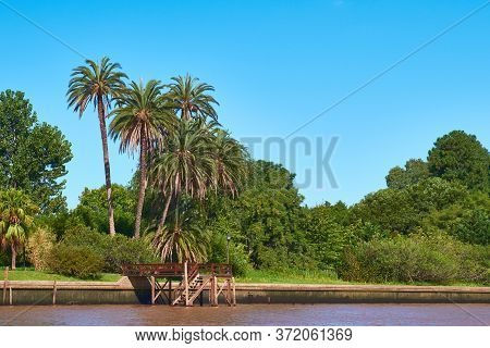 Lush Vegetation, Palm Trees On The River Bank. Tigra Delta In Argentina, River System Of The Parana