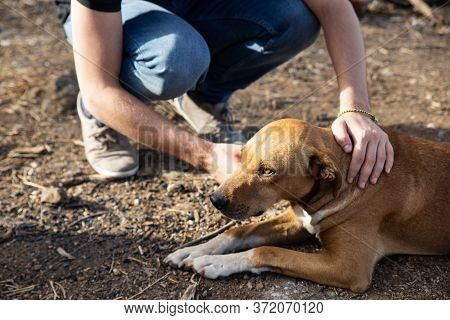 Rescued And Adopted Dog Lying On The Ground While His Owner Caresses Him. Sad-faced Dog. Adoption Co