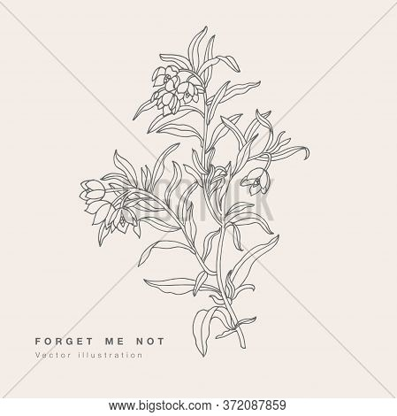 Hand Draw Vector Forget Ma Not Flowers Illustration. Floral Wreath. Botanical Floral Card On White B
