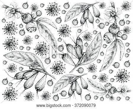 Tropical Fruit, Illustration Wall-paper Of Hand Drawn Sketch Of Goiaba De Anta, Mess Apple Or Belluc