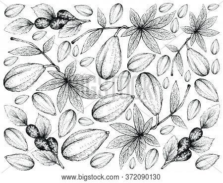 Tropical Fruits, Illustration Wall-paper Of Hand Drawn Sketch Fresh Wild Papaya Or Jacaratia Spinosa