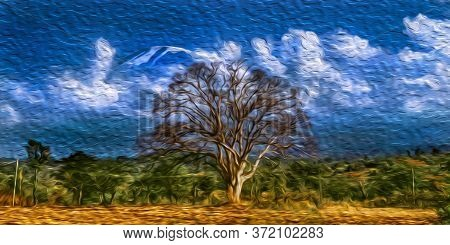 Leafless Tree With The Top Of Snowy Mount Kilimanjaro In The Background. This Tanzanian Dormant Volc