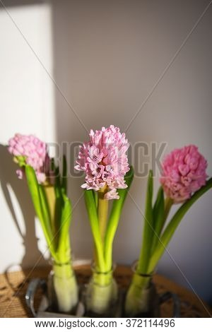Beautiful Spring Pink Hyacinth In A Vase, Beautiful Sunlight From The Window. Flowers In A Vase In A