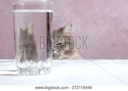 A Fluffy Grey Tabby Cat Looks Through A Glass. Distorted Water, Distortion, Deformation.