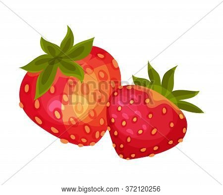 Mature Red Strawberry With Leaves For Fresh Eating Vector Illustration