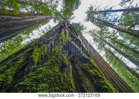 Avenue Of The Giants At Redwood National Park