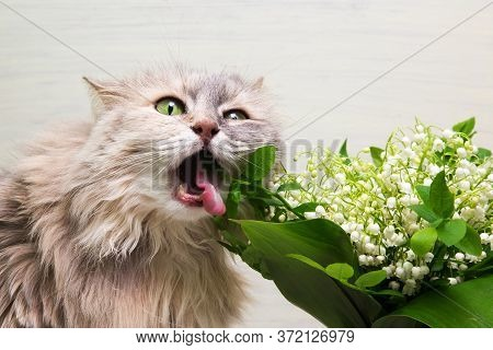 Spring Bouquet Of Fresh Flowers And Curious Kitty. Lovely Kitten. The Cat Is Trying To Eat Flowers F