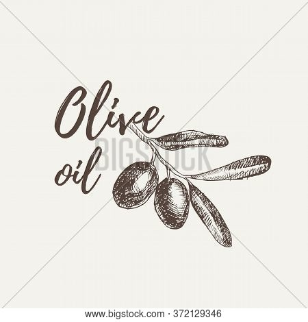 Vector Hand Drawn Sketch Of Olive Tree Branch. Olive Oil Lettering. Vector Illustration. Eps 10.