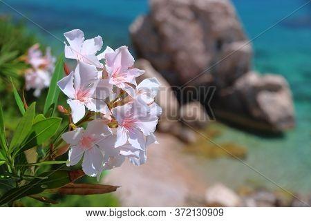 Dalmatia Adriatic Coast. Croatia Coast Landscape. Beaches And Coast Of Mimice.