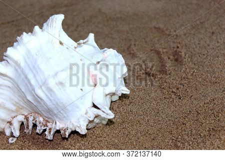 Sea Conch Shells With Sand As Background, Selective Focus With Blur.