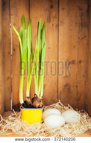 Green With Bulbs Or Green Onion Against The Wooden Background
