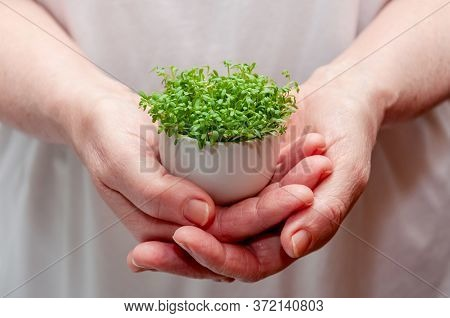 Close Up Watercress Microgreens In Woman Hands