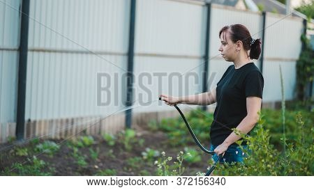 Woman Watering The Garden From Hose. Female Spraying Water On Vegetables With A Garden Hose. A Happy