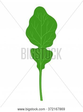 Rucola Or Arugula In Cartoon Flat Style Isolated On White Background, Vegetable Organic Product From