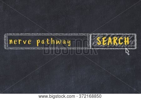 Concept Of Looking For Nerve Pathway. Chalk Drawing Of Search Engine And Inscription On Wooden Chalk