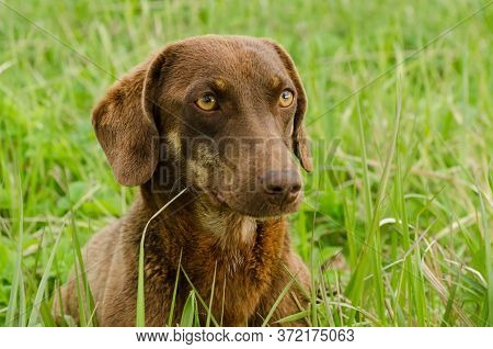 Friendly Dog With Pitiful Eyes, Close Up. Unhappy Sad Stray Animal. Shelter For Pets.