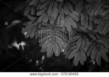 Imagem Minimalista De Uma Planta Em Preto E Branco