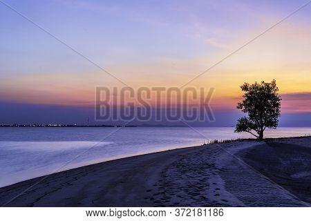 A Tree Stood Alone On The Beach At Dusk..