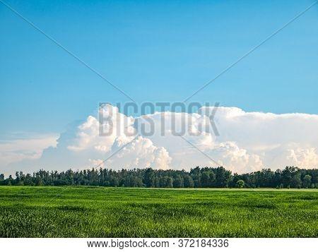 Green Shoots Of A Winter Farm Field Against A Blue Sky.