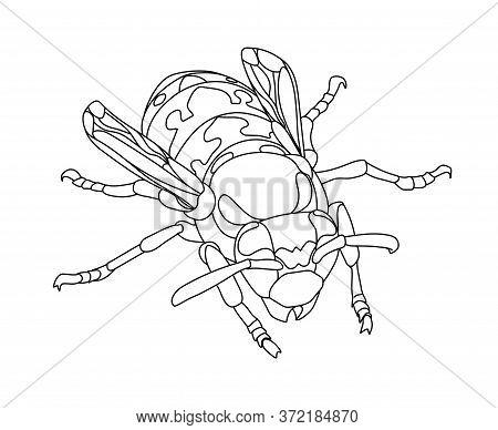 Contour Wasp2.eps