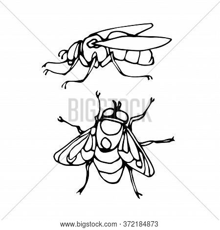 Set Of A Dirty Ugly Dung Fly, For Logo Or Icon, Infection Symbol, Vector Illustration With Black Ink