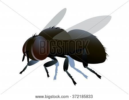 Single Dirty Brown Ugly Dung Fly With Bristles & Faceted Eyes, Logo Or Emblem, Infection Symbol, Col