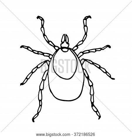 European Forest Mite, Parasite Insect, Ixodes Ricinus, Infection Carrier, Bloodsucker, Vector Illust