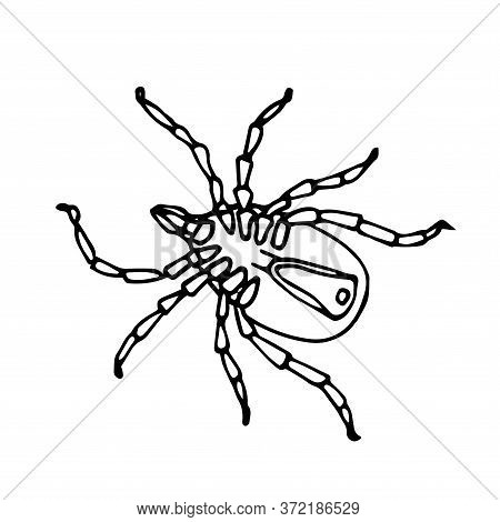 Dead Mite On Back, Parasite Insect, Ixodes Ricinus, Infection Carrier, Bloodsucker, Vector Illustrat