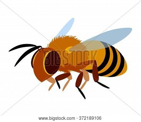 single flying yellow worker honeybee, logo or emblem, symbol of the collective unit, color vector illustration isolated on a white background in cartoon & flat style