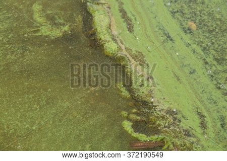 Green Algae In Water On Sandy Beach. Water Pollution. Ecological Problem