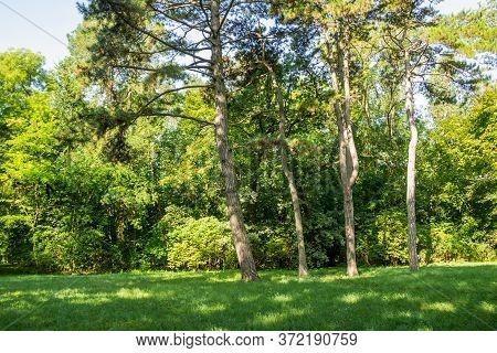 View Of The Dendrological Garden In Ukrainian Worldwide Famous Askania-nova Reserve, Member Of The W