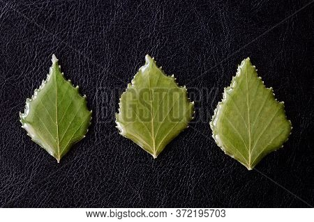 Leaves Of Birch Drenched In Epoxy On A Dark Background Close-up. The Basis For A Pendant Or Earrings