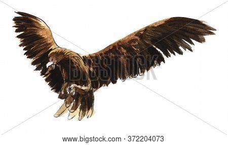 Watercolor Image Of Hunting Bird Ready To Rush For Prey Isolated On White Background. Hand Drawn Ill