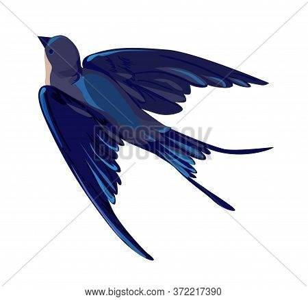 Swallow Vector, Vector Illustration Isolated Bird, Bird Flying, Bird Silhouette, Bird Vector.