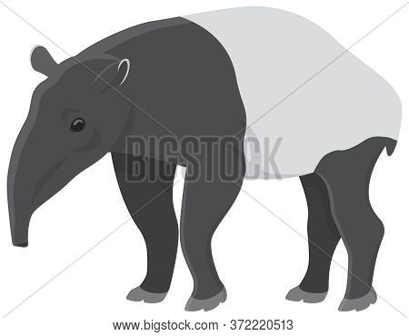Tapir In Cartoon Style. Unusual Animal Isolated On White Background.