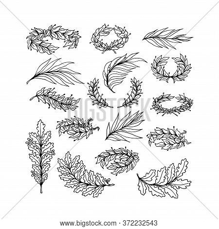 Set Of Laurel, Oak, Willow Branches Tied In A Wreath As A Symbol Of Glory And Victory, For Ornaments