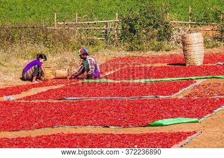 Kalaw, Myanmar - November 25, 2016: Drying Chilli Peppers In The Area Between Kalaw And Inle, Myanma