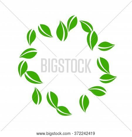 Falling Green Leaves. Fresh Tea Neat Leaves Flying. Spring Foliage Dancing On White Background. Allu