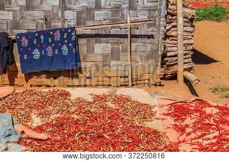 Drying Chilli Peppers In A Village In The Area Between Kalaw And Inle, Myanmar