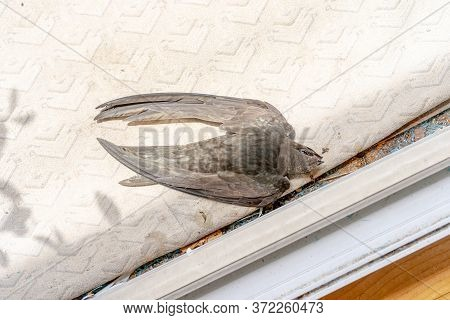 Swift Flew To A Man In The House