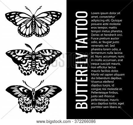 Beautiful Winged Butterfly. Collection Of Butterfly Tattoos . Mystical Symbol Of Freedom. Vector Ill
