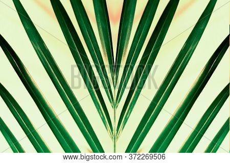 Tropical Palm Leaf Print Of Symmetrical Green Leaves