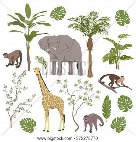 Set Of Jungle Animals And Tropical Vegetation With Giraffe, Elephant, Monkeys And Apes Isolated On W