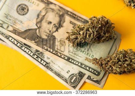 Marijuana Weed Bud And Grinder. Money Weed. Indica Medical Health. Marijuana Bud And Banknotes Of Do