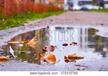 Autumn Puddle After Rain With Autumn Yellow And Maroon Leaves