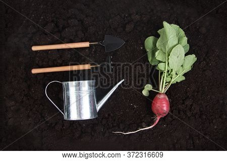 Fresh Garden Radish, Shovel, Rake And Watering Pot On The Ground Flat Lay. Gardening Concept. Image