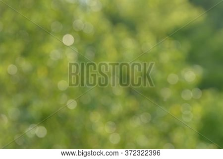 Blurred Bokeh Nature Background. Abstract Natural Backdrop Of Park Or Garden. Soft Defocused Photo O